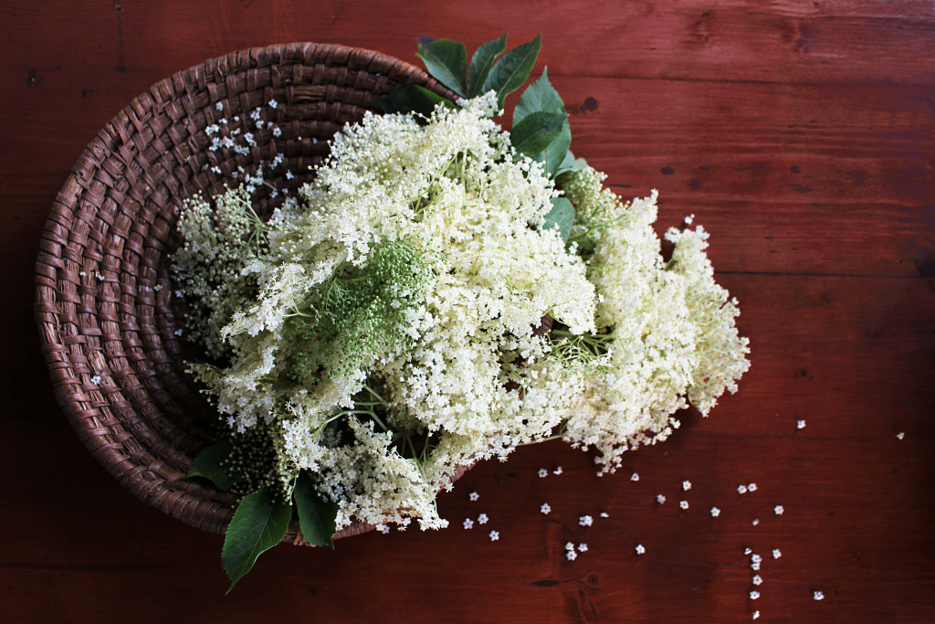elderflower drink recipe
